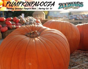 Zoomars Petting Zoo Pumpkin Patch
