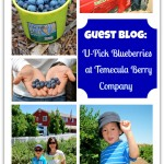 Temecula U-Pick Blueberry Farm